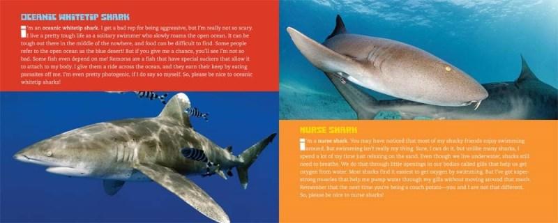 Sharks Interior 3